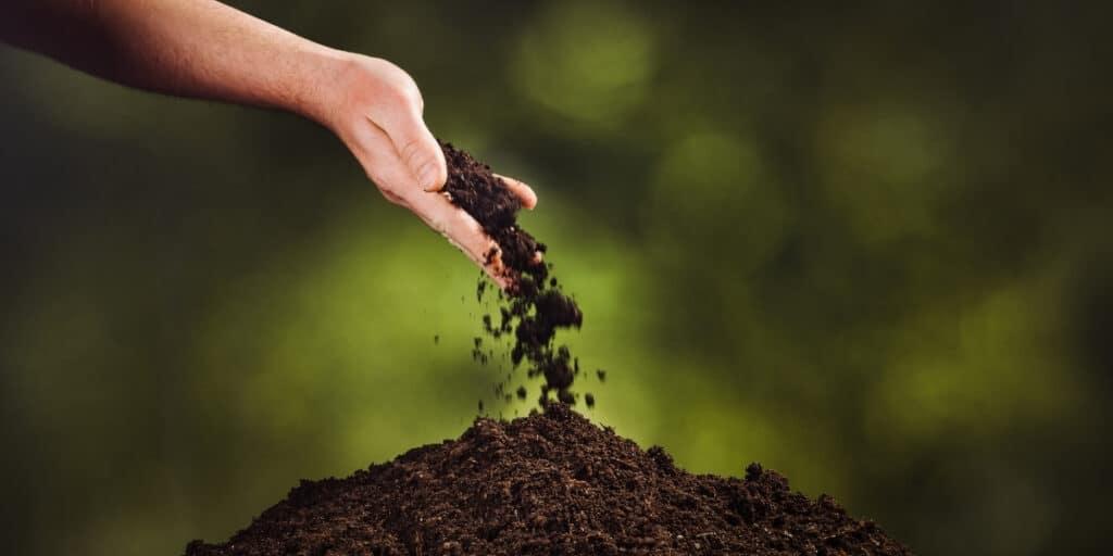bok choy plant soil