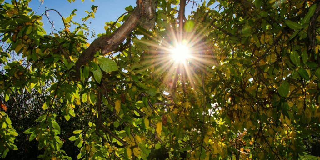 sunlight in garden