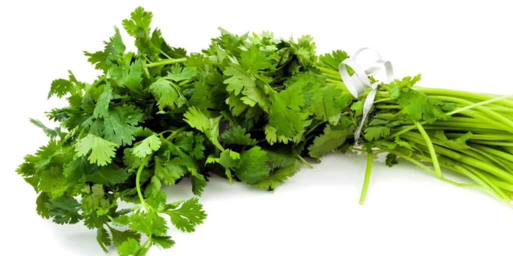 kale companion plants