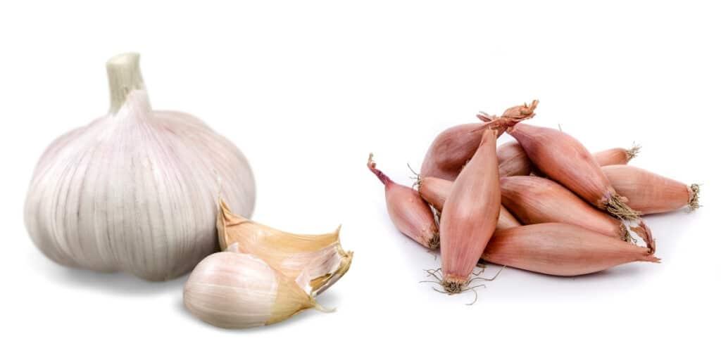 Onion Companion Plants to Plan Your Garden | Yard Surfer Leek Companion Plants