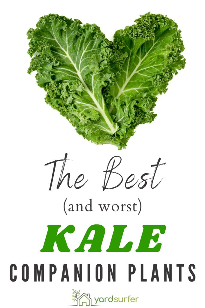 Kale Companion Plants: What to Grow with Kale? | Yard Surfer Companion Planting Kale