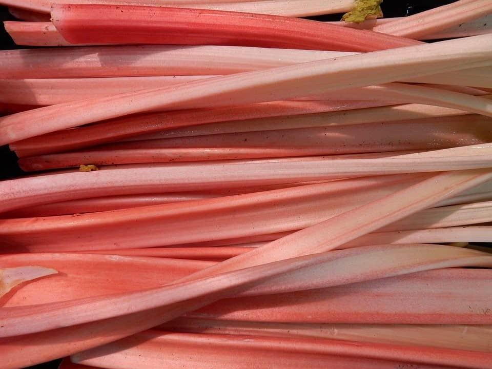 rhubarb varieties
