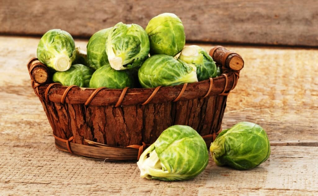 harvesting brussel sprouts