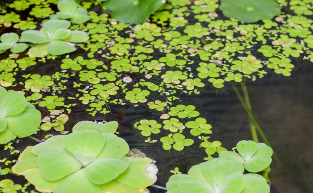 water garden plants