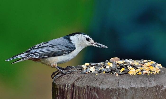 A Simple Bird Feeder