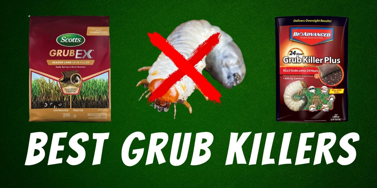 best grub killer