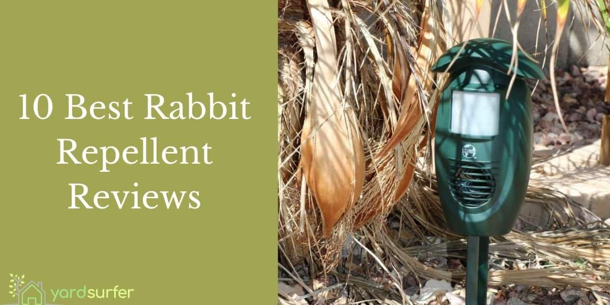 Best Rabbit Repellent Reviews