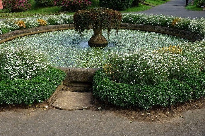 Flourishing Fountain