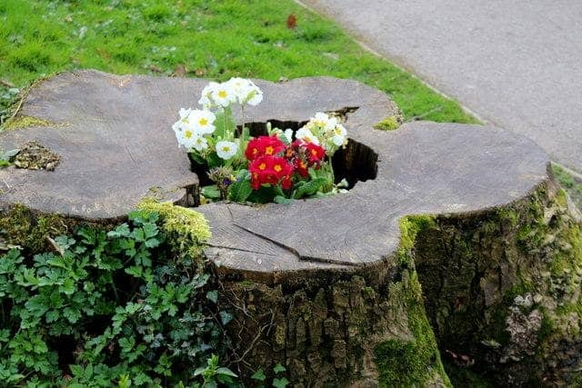 Giant Flower Pot