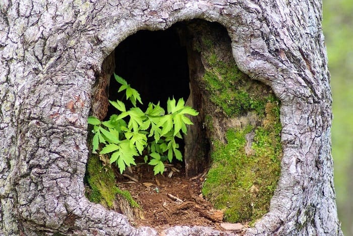 Inside Hollow Tree Planter