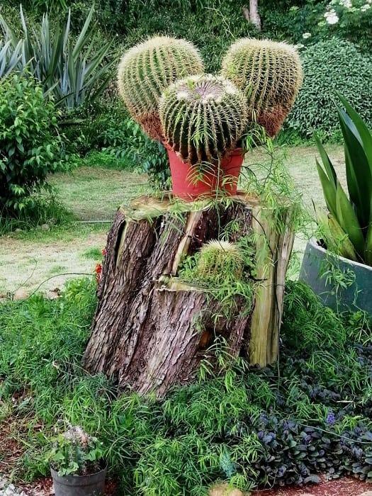 The Cactus Planter