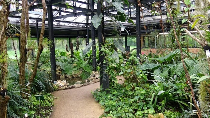 A Tropical Greenhouse Revamp