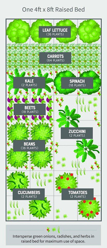 4 ft. by 8 ft. Raised Bed Layout