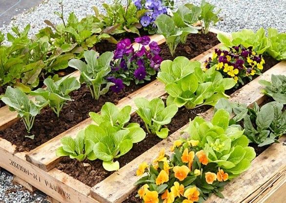 DIY Pallet Raised Garden Bed