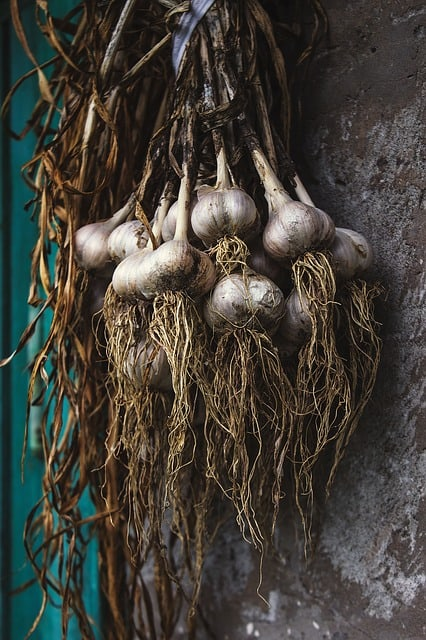 What if I pull my garlic too late