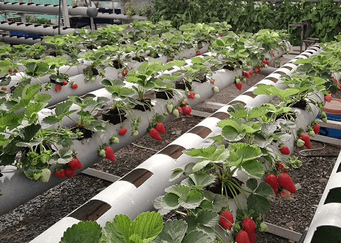 growth media for hydroponic systems