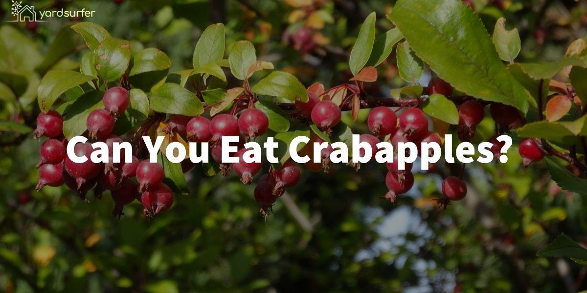 Eat Crabapples
