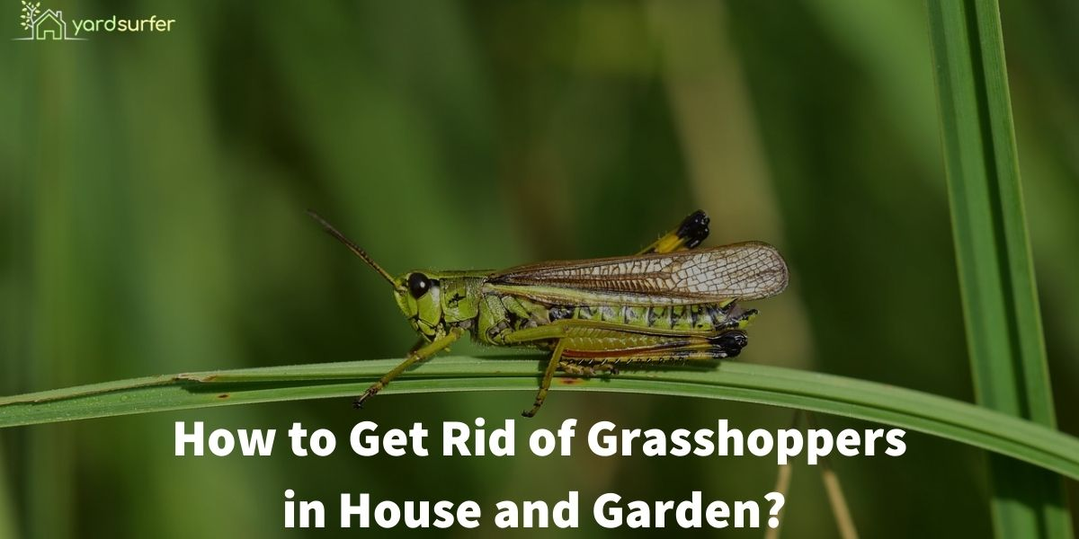 how to get rid of grasshoppers